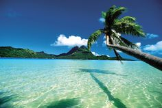 The South Pacific is one of the world's most stunning destinations, and guests can enjoy a variety of its famous gems on a Holland America Line cruise.