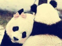 Good Friends Give Hugs   More pics on Facebook - Panda Life https://www.facebook.com/Panda-Life-894187597359826/