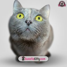 Would you want to live this awesome moment with your cat right now? Check this out: http://www.sweetiekitty.com/top-10-cat-breeds-book #cat #catoftheday #catsagram