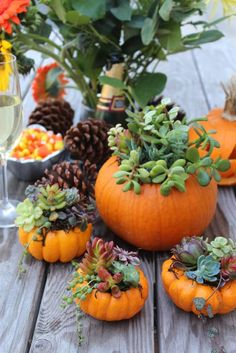 Fall Decor: Succulent-filled pumpkins. What a great idea!