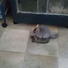 Ride me, turtle!