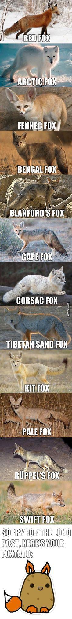 Nature Animals Fennec Fox Ideas For 2019 Cute Funny Animals, Cute Baby Animals, Funny Cute, Nature Animals, Animals And Pets, Strange Animals, Fennec Fox, Animal Memes, Animal Kingdom