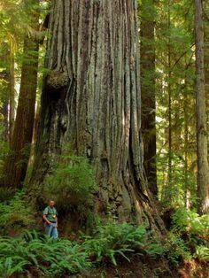 Portland Certified Arborist measuring trees south of Oregon.