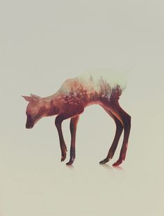 Stunning Double Exposure Animal Portraits by Andreas Lie