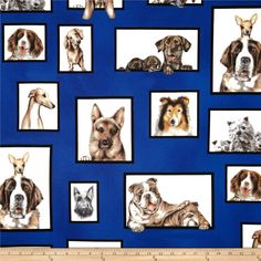 Curious Canines Dog Large Royal from @fabricdotcom  Designed by Bob Bowdige for Robert Kaufman Fabrics, this cotton print includes shades of brown,grey,cream, royal blue, black and natural. Use for quilting, crafts, apparel and home decor accents.