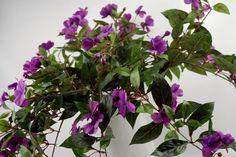"27"" Lavender Impatiens Hanging Plant Violet $27.99"