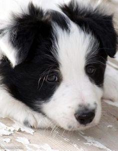 Cute puppy close up photo