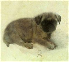 Young Pug  Albrecht Durer