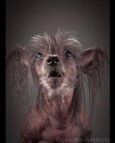 Touchants et magnifiques portraits de très, très vieux chiens