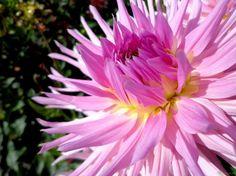 Primavera, época ideal para plantar bulbos - http://www.jardineriaon.com/primavera-epoca-ideal-para-plantar-bulbos.html #plantas