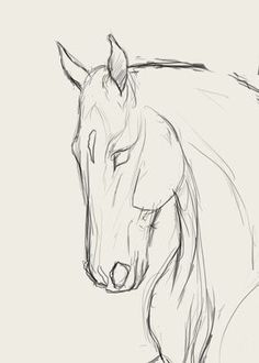 Tiere Malen Learn to Draw Step By Step: Animal Horse Head (Side View) Art Sketches Animal art sketches draw Hör Horse Learn malen Side Step Tiere View Horse Drawings, Pencil Art Drawings, Art Drawings Sketches, Realistic Drawings, Cute Drawings, Horse Pencil Drawing, Drawing Faces, Sketch Drawing, Drawing Art