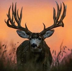 Hoping to get one this big this year!!!!!