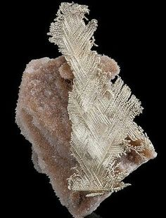 """Incredible crystalline """"feather"""" of Electrum (Silver and Gold mix) on Quartz matrix! From Howard's Claim, Manhatten, Nye County, Nevada. Photo: The Mineral Gallery of Fine Mineral Specimens Minerals And Gemstones, Crystals Minerals, Rocks And Minerals, Stones And Crystals, Cool Rocks, Beautiful Rocks, Electrum, Crystal Magic, Crystal Serenity"""