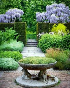 SISSINGHURST, Herb garden. Arguably the most famous garden in England, designed by Vita Sackville West and her husband Harold Nicolson. I love the details of the trefid bowl with seated-lion supports and the purple clouds of wisteria behind the hedges. Not sure why but this is one of my favourite images from Sissinghurst pinterest #sissinghurst #englishgarden #herbgarden #gardeninspiration #gardensofinstagram #gardendesign #wisteria #spring #hedges