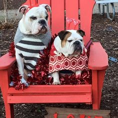 So many  of  you  have  been  thinking  about  checking  out  our  etsy  shop  for coats and hats that FIT  Bullies.  Nows your chance!  Use the  code MEATY 30 for  30%discount on all items in stock.  http://ift.tt/20RULkw #bulliesofinstagram #petclothes #etsysellers #Englishbulldog #Dogsofinstagram #bulldognation #cute #squishyfacecrew #etsysellers #handmade #doghat #PETCLOTHES #etsysellersofinstagram #handmade by meaty_wildman #lacyandpaws
