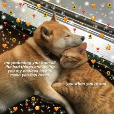 Cute Cat Memes, Cute Love Memes, Funny Memes, Animal Memes, Funny Animals, Meme Chat, Boyfriend Memes, Funny Reaction Pictures, Cute Messages