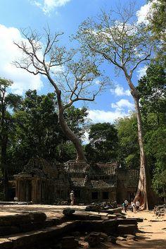 Ta Prohm Temple (Tomb Raider Temple), Angkor, Cambodia