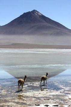 Le volcan Licancabur et Laguna Blanca à la frontière entre la Bolivie et le Chili. © DR