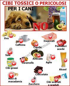 #Cibi tossici o pericolosi per i #cani