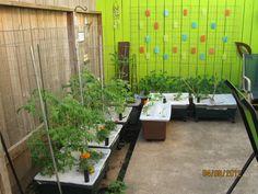 This year we're streamlining the veggies.
