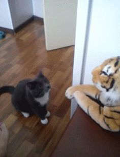 #Cat teaches a tiger a lesson