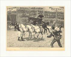 Aus dem Zirkus Busch in Berlin: Reiterin Plitzner Manege Pferd Holzstich E 16039