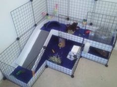 1000 images about squeak squeak guinea pigs on pinterest for Build your own guinea pig cage