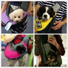 Comfortable Mesh Pet Dog Cat Puppy Dogs Carriers Kennel Travel Tote Shoulder Bag Dog Backpack 4 Coloe 45*13*27cm