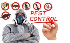 Call @ 99997875671. Pests are omnipresent creatures and disturb its surroundings with full strength. Call Mourier pest control services in Gurgaon to wipe off these animals with immediate effect. Get your tranquility with our magnificent services.