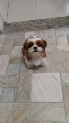 Dogs, Animals, Princess, Animaux, Doggies, Animal, Animales, Pet Dogs, Dog