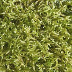 Enlever la mousse d'une pelouse Grass, Nature, Planters, Garden, Herbs