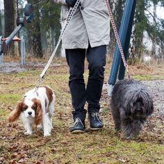 This is love... walking in the rain. #dog #petfancy #dogs #petstagram #instadog #petsagram #doglover #dogs_of_instagram #instagramdogs #pup #ilovemydog #honden #sofienbergparken #oslove #pup #ilovemydog  #hunden #instapuppy #lovedogs #mypets #shoping #minikpatiler #pies #designer #slowlife #dogmilk  #pattifurry #hund #design #hunde