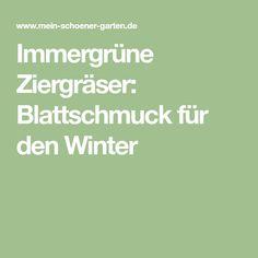 Immergrüne Ziergräser: Blattschmuck für den Winter
