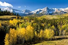 """""""Yellow Aspens In The Rockies"""" by Peter B. Kunasz, Western United States // The San Juan mountain range in Colorado borders the area between Ouray, Telluride and Durango. In the fall and autumn, with fresh snow from new storms, and aspen leaves turning red and yellow, it is a spectacular site for those seeking landscape and scenic... // Imagekind.com -- Buy stunning, museum-quality fine art prints, framed prints, and canvas prints directly from independent working artists and photographers."""