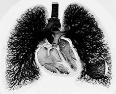 circulation coeur poumon