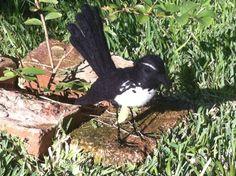 Willie Wagtail by Catherine Stein  skittykitty.com Felt Art, Felting, Kitty, Sculpture, Crafty, Bird, Flowers, Animals, Little Kitty