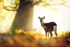 Animals | Tumblr