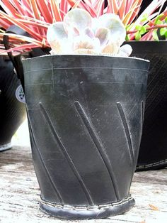 Different style planter.