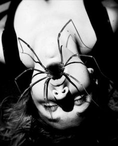 Spiders and photography is actually pretty beautiful in a creepy way