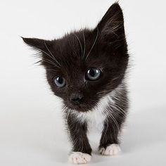 Funny Cat Names for Comical Felines
