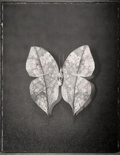 Paper fly... er, butterfly. ;)  SKY/LIFE by David Ellingsen, via Behance