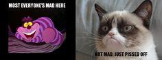 Cheshire vs. Grumpy