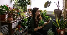 Love Plants? Then This DIY Garden Room Is for You—Here's How To Create It Real Estate Articles, Real Estate Tips, Potato Vines, Plant Needs, Ficus, Types Of Plants, Green Plants, Small Plants, Houseplants