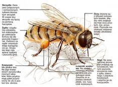 alt Bee Feeder, English Games, Holidays And Events, Alter, Kids Learning, Activities For Kids, Insects, Education, Animals