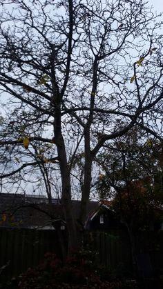 Natuurlijke structuur  Een walnotenboom