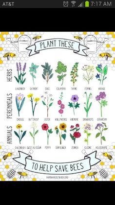 Plants that help save bees!