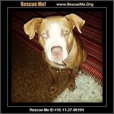 ― South Africa Dog Rescue ― ADOPTIONS ―RescueMe.Org Post Animal, Rescue Dogs, South Africa, Pitbulls, Adoption, Shop, Animals, Foster Care Adoption, Animales
