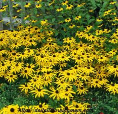Looks like it's going to be a hot, sunny and dry summer, so I though I would share this with you: The 10 best perennials for sun and drought. Have a nice garden all summer long. Happy gardening.