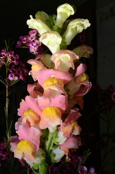 Snap Dragons by Keith Watson aka Keith Watson, via Flickr