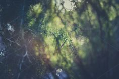 Check out Plant with soft lighting by Seronda Estudio on Creative Market
